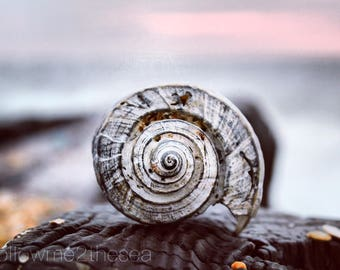 Seashell Photo~She Sells Seashells