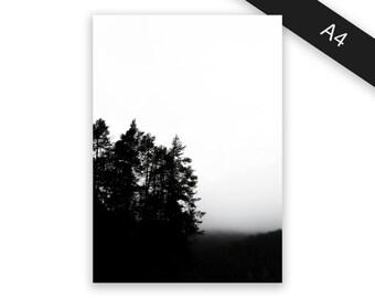 Forest edge - art print/photo print A4
