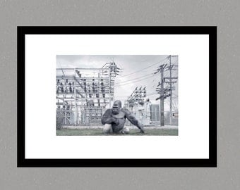 Fine art Print, gorilla photographic print, wildlife photography, wall art, landscape photography, urban gorilla, landscape photo, photo art