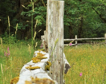 Photography Split Rail Fence With Moss