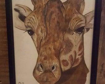 Giraffe Drawing - Framed