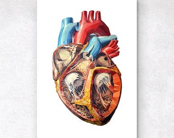 Dissected heart poster Low poly anatomical heart poster Geometric heart art print LPA001