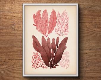 Botanical print, Seaweed art print, Scientific illustration, Watercolor print, Coastal print, Framed art, Beach decor, Beach wall decor