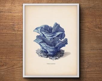 Blue coral print, Nautical decor Coastal beach print, Sea coral prints, Coastal decor print, Coral prints, Coastal art, Coastal decor