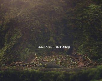 Moss Tree Trunk Digital Background for Newborn