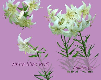 White Lilies png, White Lilies overlay, clipart