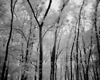 Infrared Tree Landscape Photograph Wall Art in Metal and Photo Paper Print
