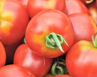 Heirloom Tomato Seeds-Money Maker-Organic-NON-GMO-High Yielding