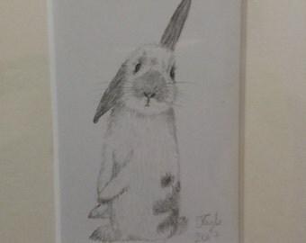 Mini standing rabbit pencil drawing