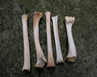 Real Deer Leg Bones Small