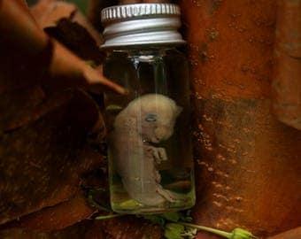 underdeveloped nutria fetus