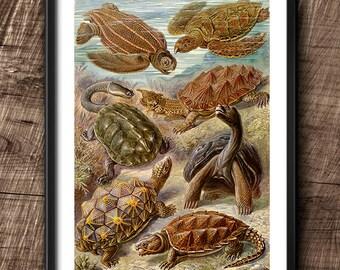 Turtles · Instant Download · Vintage · Wall · Printable · Digital File #86