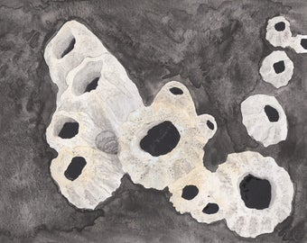 Barnacles watercolor painting, nautical art print