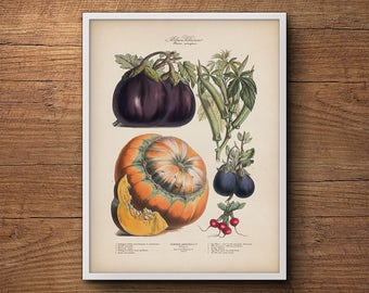 Vegetable print, French vegetables print, Botanical art, Kitchen wall art, Kitchen decor, Botanical print, Large botanical poster, Wall art