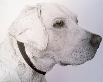 Custom Pet/Animal Drawing from Photos