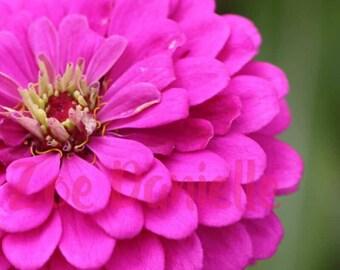Flower Canvas Photo