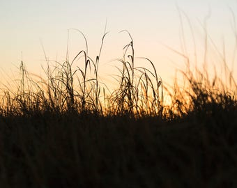 Sunrise Over Grass Fine Art Print