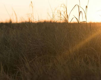 Capella Sunrise Over Long Grass Fine Art Print