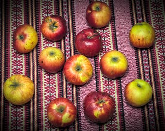 Apples, photography