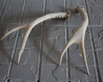 VINTAGE pair (2) individual sun bleached deer HORN / ANTLERS