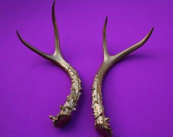 VINTAGE pair (2) individual deer HORN / ANTLERS