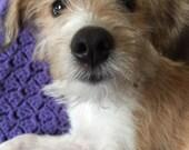 Porcelain Dog Breed or Other Animal Ornament