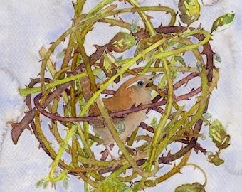 Captive Wren  ORIGINAL painting