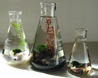 Marimo Balls Air Plants in One Beaker Flask Zen Pet Mini Science Aquarium / Terrarium