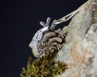 Anatomical Heart Pendant in Silver