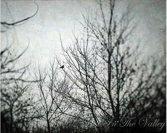 Nature Photography, Black and White Print, Rustic Wall Decor, Winter photograph, Photo of Bird, Tree Picture, Wall Art, Woodland Decor, Grey