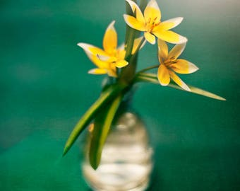 Green and Yellow Spring Study, Fine Art Print, Floral Decor,