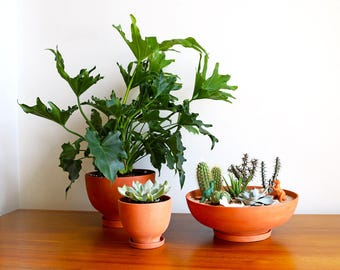 Terra-Cotta Planters: Set of 3