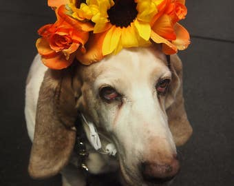 Dog's Yellow Spring flower hat