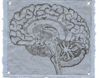 Logical Brain- Etching- Science Geekery Biology- 8 x 10-Monoprint-1 of 1