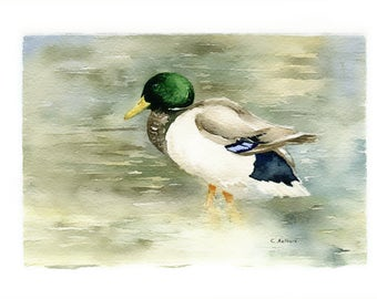 Original Watercolor of a Mallard Duck -  4 x 6 inches Painting