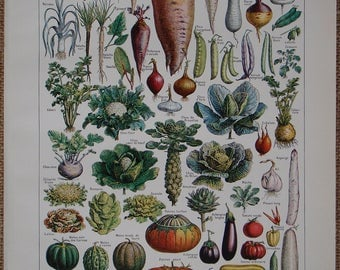 LÉGUMES et PLANTES POTAGÈRES (vegetables) a French vintage book print with illustration by Adolphe Millot Nouveau Larousse Illustré 1949