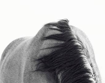 Horse Back Photograph in Black and White | Modern Equine Art