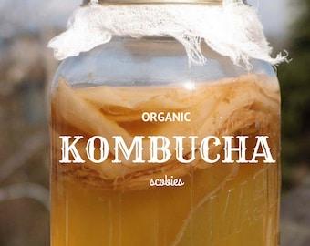 Organic Kombucha Mushroom