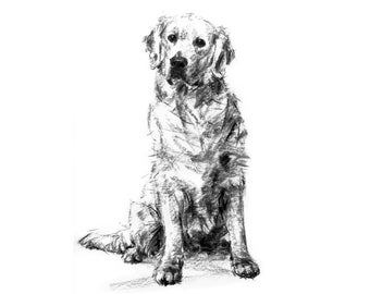 Golden Retriever Drawing  - fine art dog print - golden retriever gift