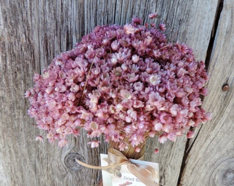 Dried Flower Bouquet Mini Star Daisy Bunch Dyed Pink Floral Supply Everlasting Flowers Strawflowers Natural Craft Supplies Miniature Daisy