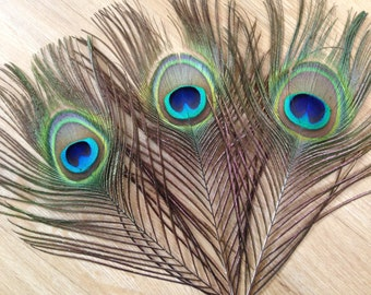 TWO Premium Peacock Tail Feathers - cruelty free natural albino ivory indigo peacock tail feathers