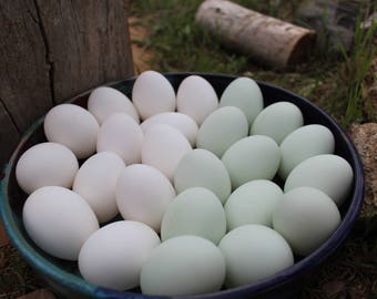 Single Hole Blown Duck Eggs - White or Mint Green