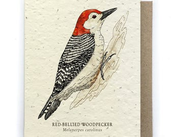 Woodpecker Greeting Card - Plantable Seed Paper - Blank Inside