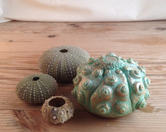 Verdigris painted Sea Urchin Sculpted Paper Weight