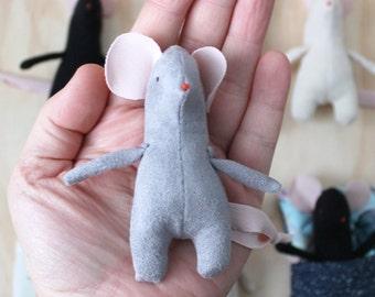 Grey pocket mouse