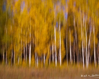 Blurred Aspens