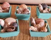 Sale! 3 for 10 dollars! Mini Beach Crate Coastal Ornaments filled w.Hand Collected Sea Shells & Raffia, also can be made into magnets.