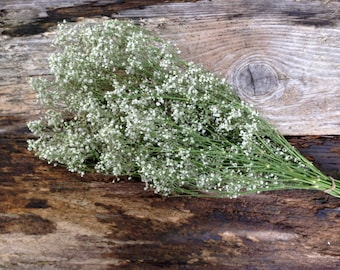 Dried Baby's Breath Bunch - Christmas Decor, Weddings, Craft Supply and Special Events - Dried Ivory Baby's Breath