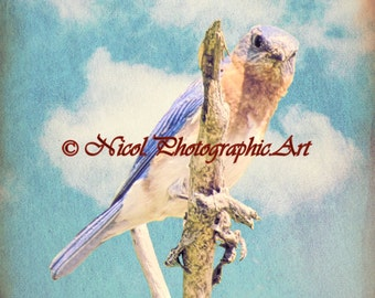 Bluebird Bird Aqua Sky Clouds Blue Wall Art Home Decor Print Matted Picture A245