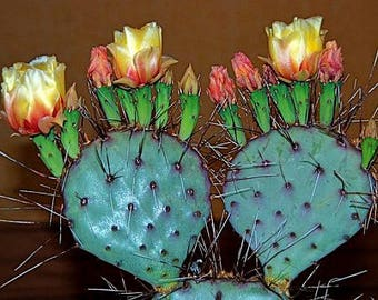 Prickly Pear Collection, Opuntia Mix, 25 seeds, colorful cactus, tasty fruit, showy blooms, drought tolerant, desert garden or windowsill